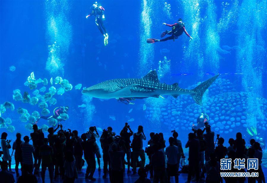 (社会)(1)潜水戏鲸鲨