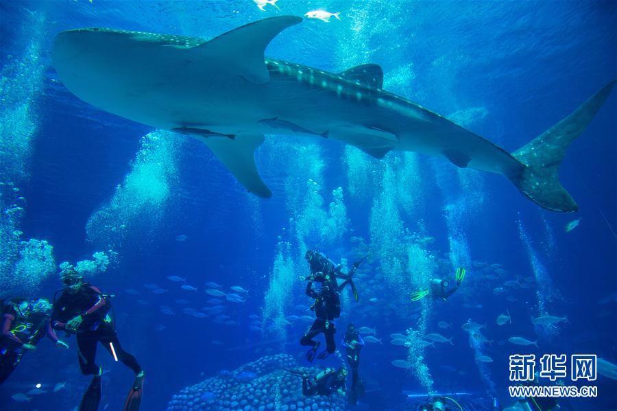 (社会)(4)潜水戏鲸鲨